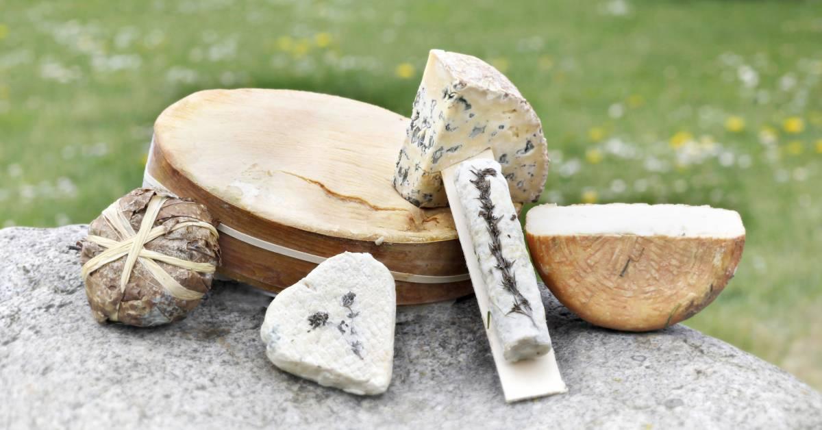 Mejeri og ost