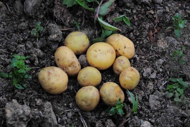Sæsonnyt fra Prima Frugt